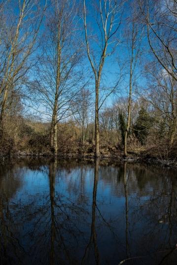Carr Lane Woods